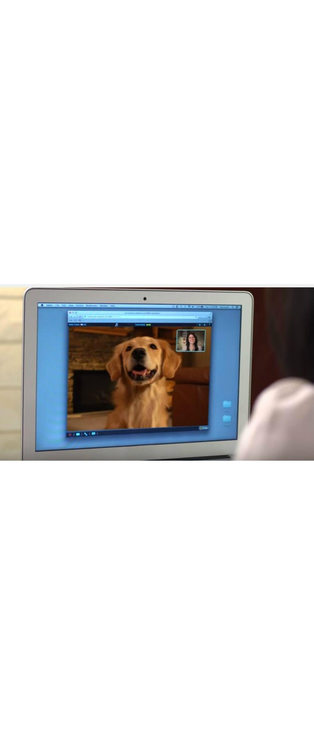 Gracias a la tecnolog�a, ahora puedes chatear con tus mascotas