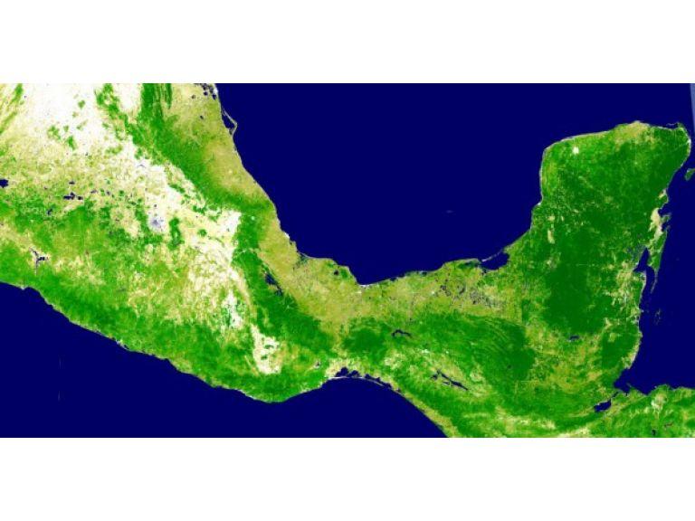 Google Earth Engine ayudará a la conservación de los bosques