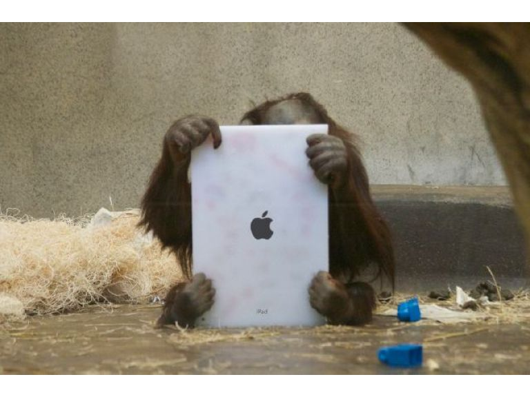 Los orangutanes pueden comunicarse a través de las tablets.