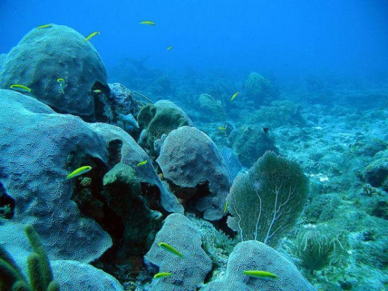 Ahora Google Maps también bajo el mar.
