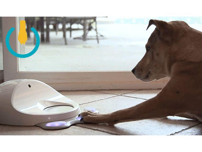 Una consola WiFi que entretiene a los perros